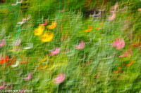impressions of a flower garden