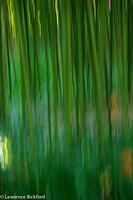 bamboo with stream